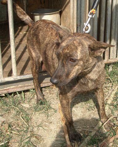 060217赤トゥラーの仔犬の母犬.jpg