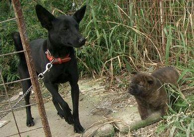 060224琉球犬「黒」1.jpg