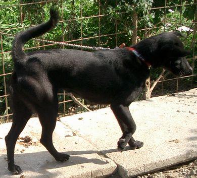 060224琉球犬「黒」2.jpg