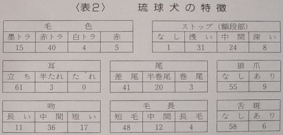 琉球犬の特徴.jpg